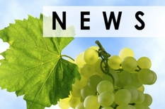 Sultana raisins crop news, Sayer Dates, Iranian Raisins, California Raisins, Turkish raisins, Chopped Dates new, crop outlook, grapes news